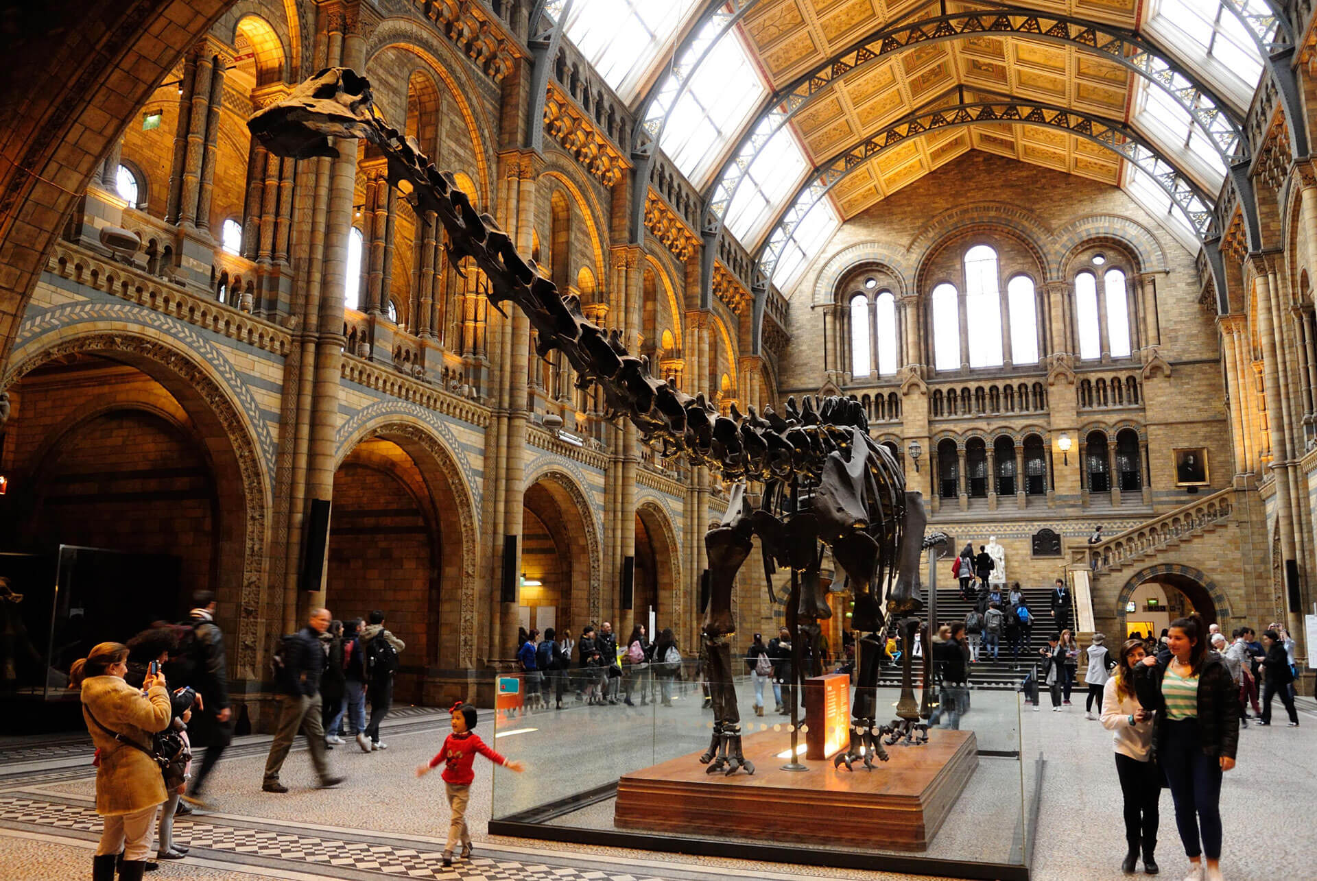 Natural History Museum Interactive Experience